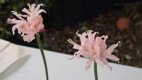 花ギフト|フラワーギフト|誕生日 花|カノシェ話題|スタンド花|ウエディングブーケ|花束|花屋|P1010893
