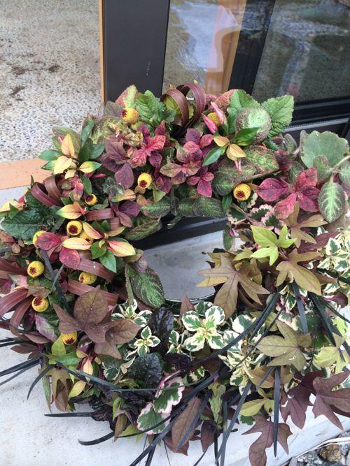 花ギフト|フラワーギフト|誕生日 花|カノシェ話題|スタンド花|ウエディングブーケ|花束|花屋|IMG_6755
