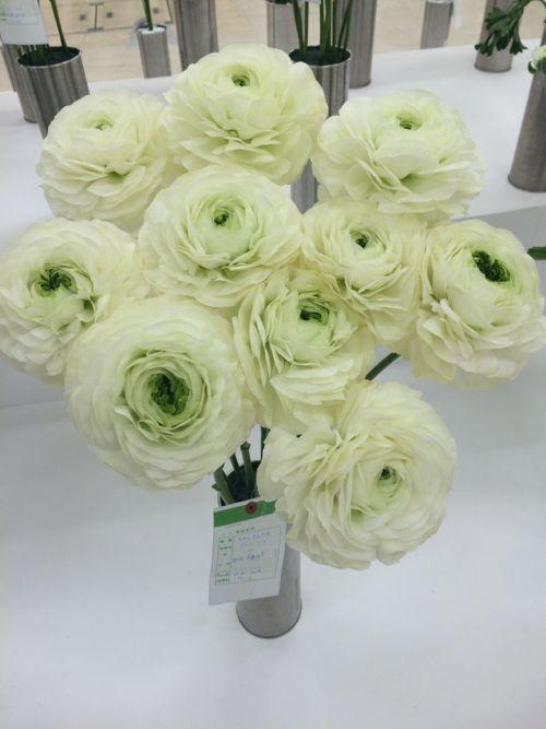 花ギフト|フラワーギフト|誕生日 花|カノシェ話題|スタンド花|ウエディングブーケ|花束|花屋|IMG_7079