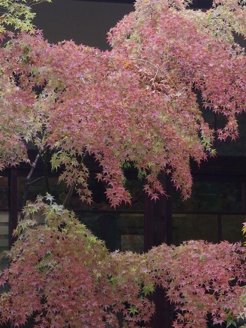 花ギフト|フラワーギフト|誕生日 花|カノシェ話題|スタンド花|ウエディングブーケ|花束|花屋|PB090357