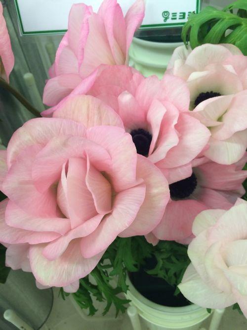 花ギフト|フラワーギフト|誕生日 花|カノシェ話題|スタンド花|ウエディングブーケ|花束|花屋|IMG_7069