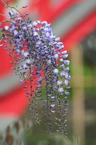 花ギフト|フラワーギフト|誕生日 花|カノシェ話題|スタンド花|ウエディングブーケ|花束|花屋|橋 アップ