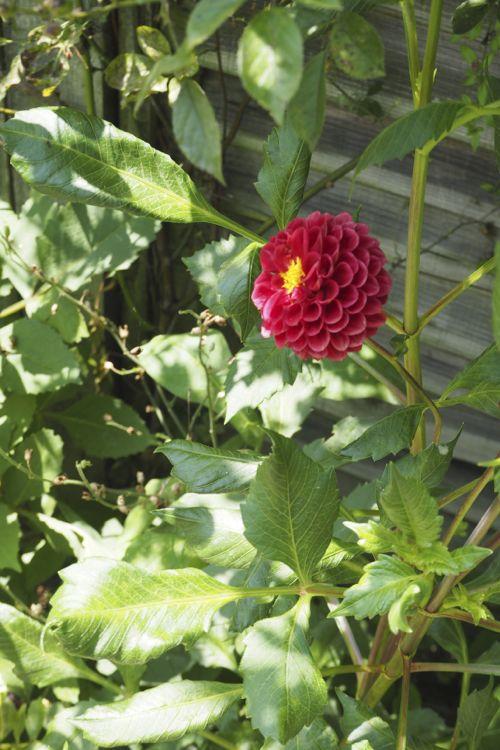 花ギフト|フラワーギフト|誕生日 花|カノシェ話題|スタンド花|ウエディングブーケ|花束|花屋|P8130114