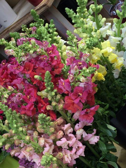 花ギフト|フラワーギフト|誕生日 花|カノシェ話題|スタンド花|ウエディングブーケ|花束|花屋|IMG_8914