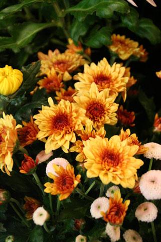 花ギフト フラワーギフト 誕生日 花 カノシェ話題 スタンド花 ウエディングブーケ 花束 花屋 IMG_0112
