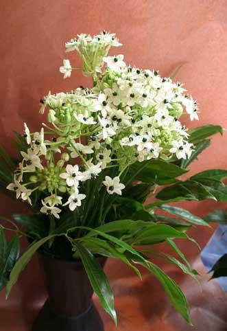 花ギフト|フラワーギフト|誕生日 花|カノシェ話題|スタンド花|ウエディングブーケ|花束|花屋|オーニソ