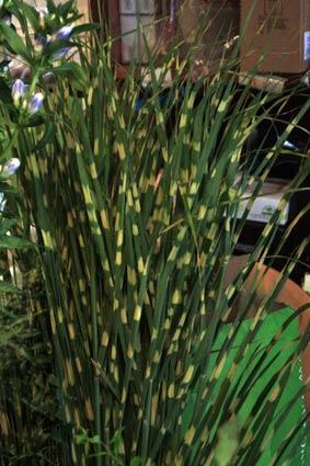 花ギフト|フラワーギフト|誕生日 花|カノシェ話題|スタンド花|ウエディングブーケ|花束|花屋|IMG_4307