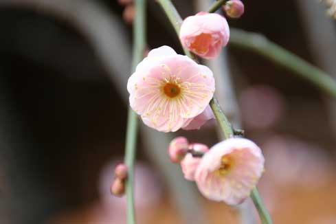 花ギフト|フラワーギフト|誕生日 花|カノシェ話題|スタンド花|ウエディングブーケ|花束|花屋|梅