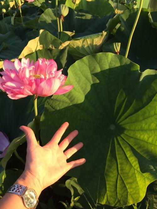 花ギフト|フラワーギフト|誕生日 花|カノシェ話題|スタンド花|ウエディングブーケ|花束|花屋|IMG_6805