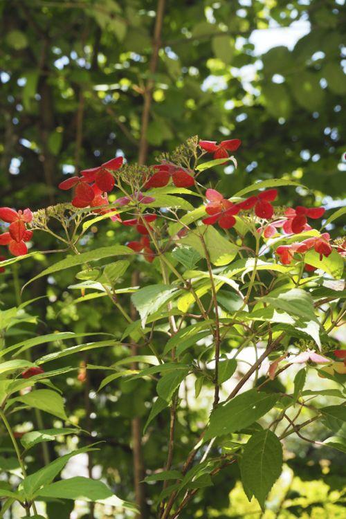 花ギフト|フラワーギフト|誕生日 花|カノシェ話題|スタンド花|ウエディングブーケ|花束|花屋|P8130111