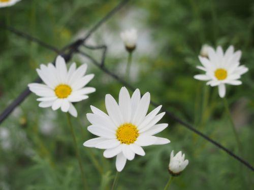 花ギフト|フラワーギフト|誕生日 花|カノシェ話題|スタンド花|ウエディングブーケ|花束|花屋|P1010199