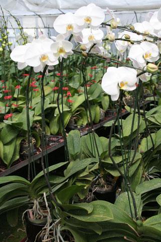 花ギフト|フラワーギフト|誕生日 花|カノシェ話題|スタンド花|ウエディングブーケ|花束|花屋|cca15150