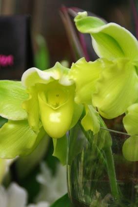 花ギフト|フラワーギフト|誕生日 花|カノシェ話題|スタンド花|ウエディングブーケ|花束|花屋|IMG_6060