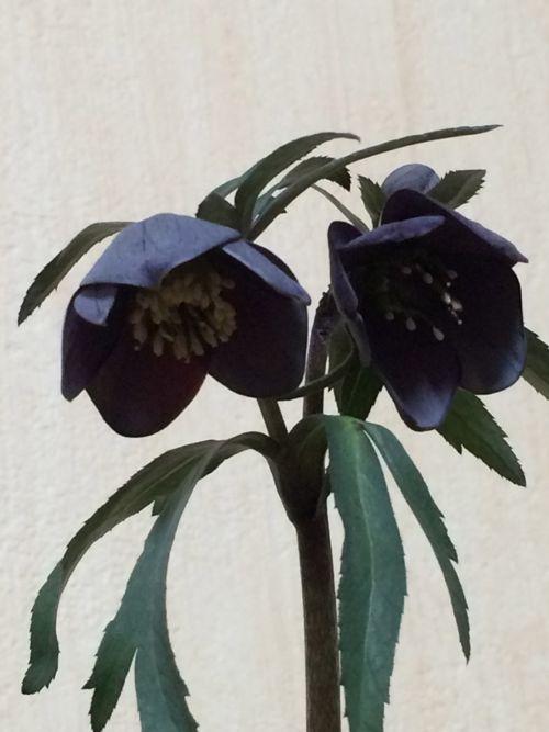 花ギフト|フラワーギフト|誕生日 花|カノシェ話題|スタンド花|ウエディングブーケ|花束|花屋|IMG_9563