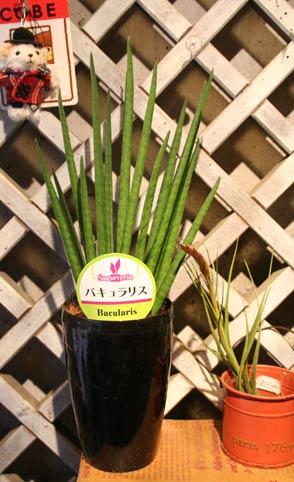 花ギフト|フラワーギフト|誕生日 花|カノシェ話題|スタンド花|ウエディングブーケ|花束|花屋|IMG_8009
