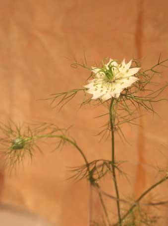 花ギフト|フラワーギフト|誕生日 花|カノシェ話題|スタンド花|ウエディングブーケ|花束|花屋|ニゲラ