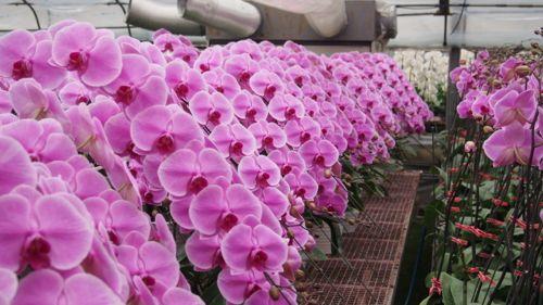 花ギフト|フラワーギフト|誕生日 花|カノシェ話題|スタンド花|ウエディングブーケ|花束|花屋|P1010976