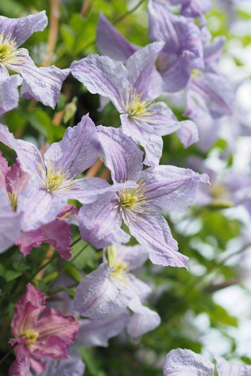 花ギフト|フラワーギフト|誕生日 花|カノシェ話題|スタンド花|ウエディングブーケ|花束|花屋|P6022708