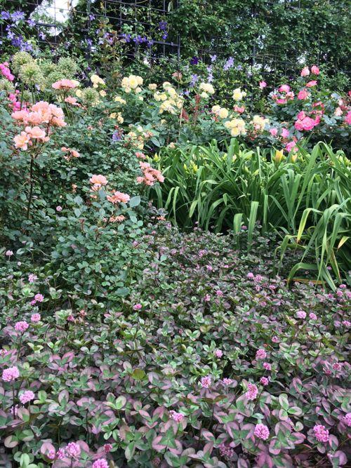花ギフト|フラワーギフト|誕生日 花|カノシェ話題|スタンド花|ウエディングブーケ|花束|花屋|IMG_1673