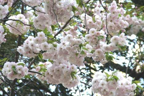 花ギフト|フラワーギフト|誕生日 花|カノシェ話題|スタンド花|ウエディングブーケ|花束|花屋|上野桜2