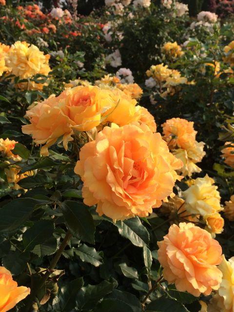 花ギフト|フラワーギフト|誕生日 花|カノシェ話題|スタンド花|ウエディングブーケ|花束|花屋|IMG_1500