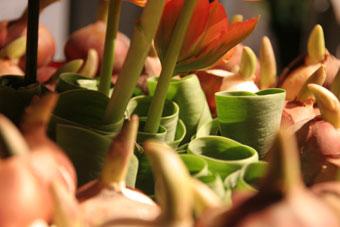花ギフト|フラワーギフト|誕生日 花|カノシェ話題|スタンド花|ウエディングブーケ|花束|花屋|赤リップ2