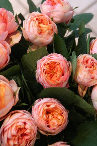 花ギフト|フラワーギフト|誕生日 花|カノシェ話題|スタンド花|ウエディングブーケ|花束|花屋|ベビー