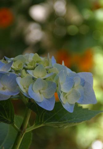 花ギフト|フラワーギフト|誕生日 花|カノシェ話題|スタンド花|ウエディングブーケ|花束|花屋|アジサイ青