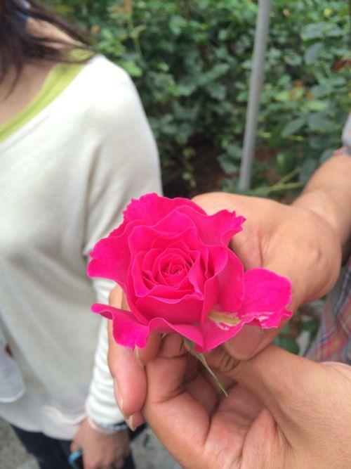 花ギフト|フラワーギフト|誕生日 花|カノシェ話題|スタンド花|ウエディングブーケ|花束|花屋|IMG_4798