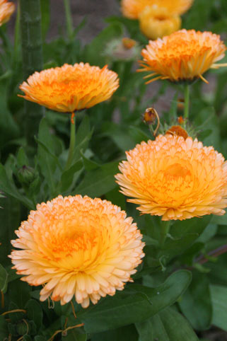 花ギフト|フラワーギフト|誕生日 花|カノシェ話題|スタンド花|ウエディングブーケ|花束|花屋|かれん