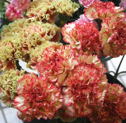 花ギフト|フラワーギフト|誕生日 花|カノシェ話題|スタンド花|ウエディングブーケ|花束|花屋|すずきさん