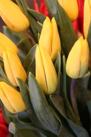 花ギフト|フラワーギフト|誕生日 花|カノシェ話題|スタンド花|ウエディングブーケ|花束|花屋|ストロングゴールド?