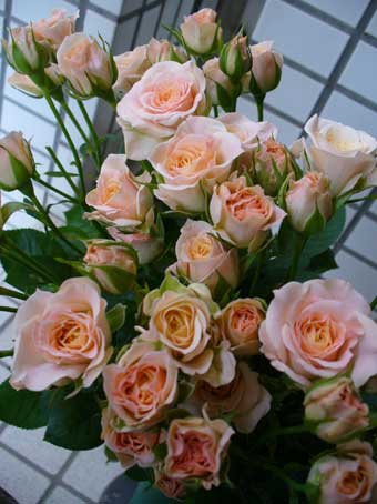 花ギフト|フラワーギフト|誕生日 花|カノシェ話題|スタンド花|ウエディングブーケ|花束|花屋|ビターラ