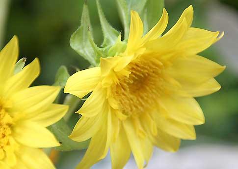 花ギフト フラワーギフト 誕生日 花 カノシェ話題 スタンド花 ウエディングブーケ 花束 花屋 モネ