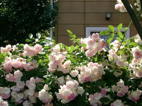 花ギフト|フラワーギフト|誕生日 花|カノシェ話題|スタンド花|ウエディングブーケ|花束|花屋|e738