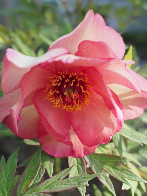 花ギフト|フラワーギフト|誕生日 花|カノシェ話題|スタンド花|ウエディングブーケ|花束|花屋|P1010645