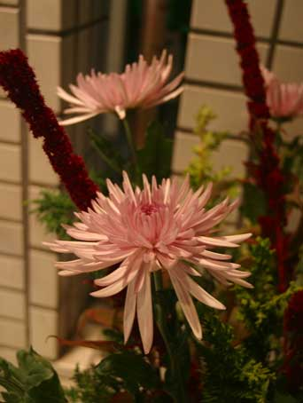 花ギフト|フラワーギフト|誕生日 花|カノシェ話題|スタンド花|ウエディングブーケ|花束|花屋|アナスタ