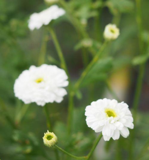 花ギフト|フラワーギフト|誕生日 花|カノシェ話題|スタンド花|ウエディングブーケ|花束|花屋|P1010185