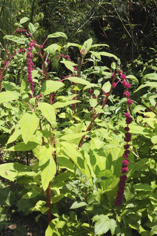 花ギフト|フラワーギフト|誕生日 花|カノシェ話題|スタンド花|ウエディングブーケ|花束|花屋|P8130102