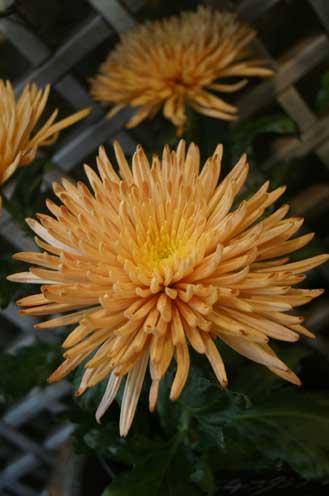 花ギフト|フラワーギフト|誕生日 花|カノシェ話題|スタンド花|ウエディングブーケ|花束|花屋|ブロンズ