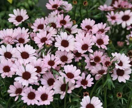 花ギフト|フラワーギフト|誕生日 花|カノシェ話題|スタンド花|ウエディングブーケ|花束|花屋|マウイ