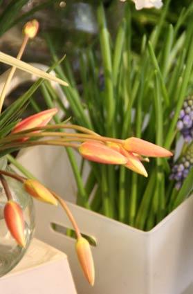花ギフト|フラワーギフト|誕生日 花|カノシェ話題|スタンド花|ウエディングブーケ|花束|花屋|IMG_6062