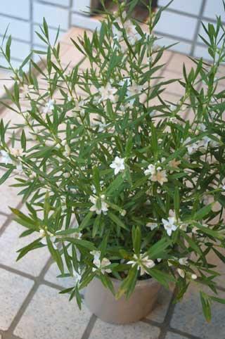 花ギフト|フラワーギフト|誕生日 花|カノシェ話題|スタンド花|ウエディングブーケ|花束|花屋|サザンクロス