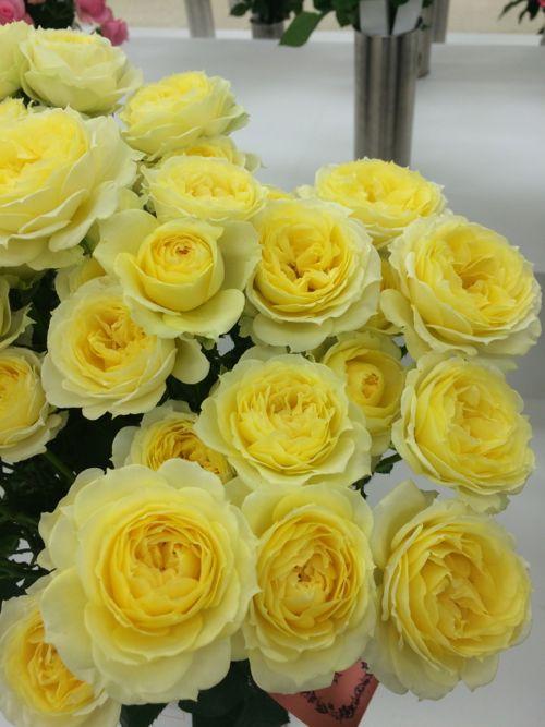 花ギフト|フラワーギフト|誕生日 花|カノシェ話題|スタンド花|ウエディングブーケ|花束|花屋|IMG_7117