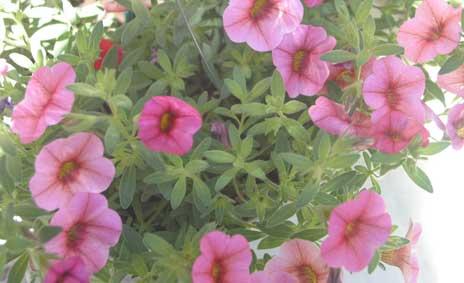 花ギフト フラワーギフト 誕生日 花 カノシェ話題 スタンド花 ウエディングブーケ 花束 花屋 サフィニア