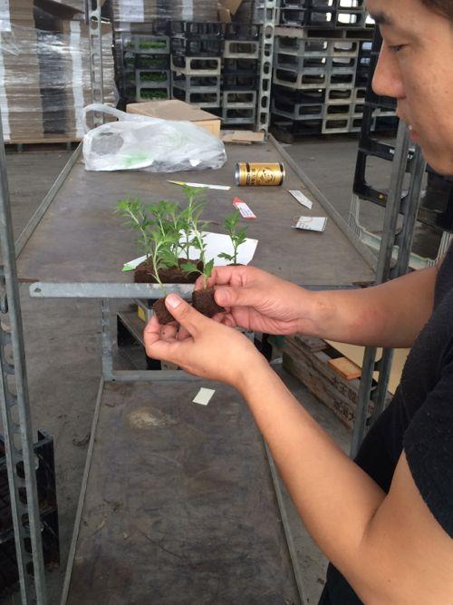花ギフト|フラワーギフト|誕生日 花|カノシェ話題|スタンド花|ウエディングブーケ|花束|花屋|IMG_6874