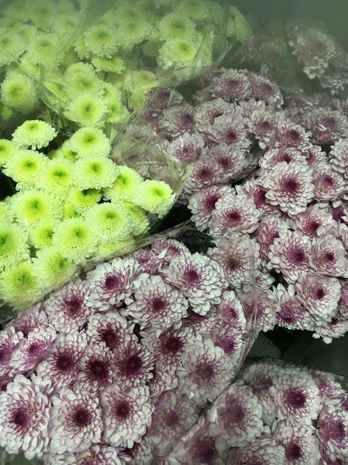 花ギフト|フラワーギフト|誕生日 花|カノシェ話題|スタンド花|ウエディングブーケ|花束|花屋|IMG_0970