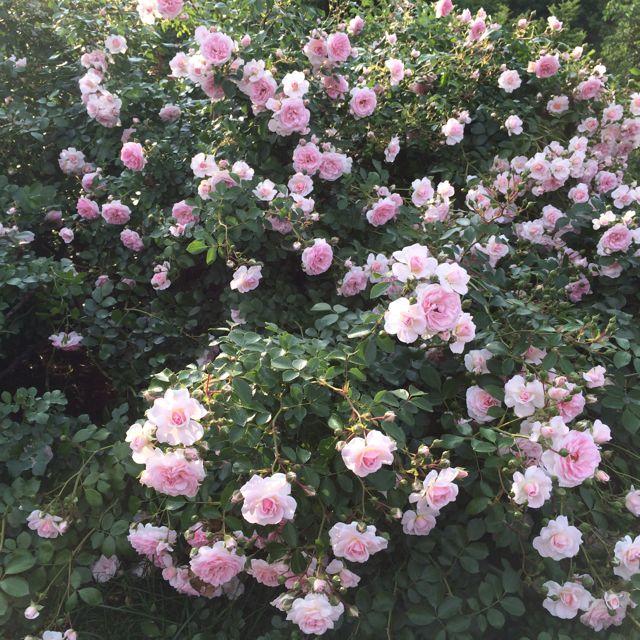 花ギフト|フラワーギフト|誕生日 花|カノシェ話題|スタンド花|ウエディングブーケ|花束|花屋|IMG_1492