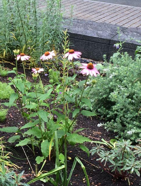 花ギフト|フラワーギフト|誕生日 花|カノシェ話題|スタンド花|ウエディングブーケ|花束|花屋|IMG_1626