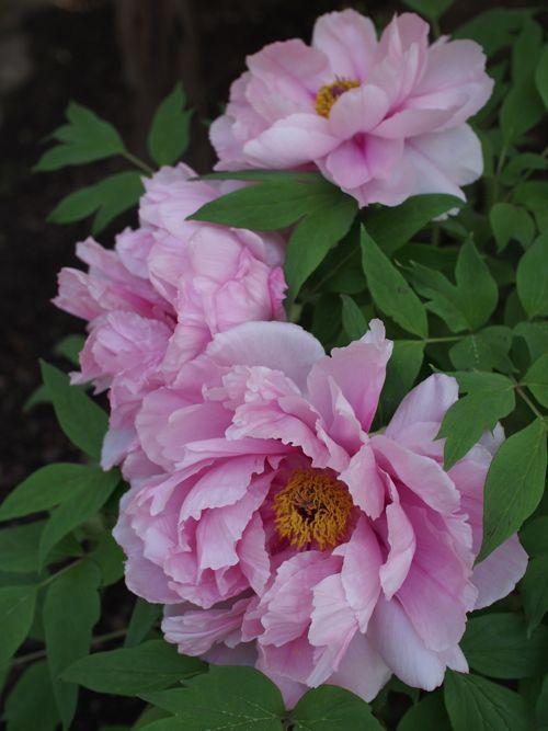 花ギフト|フラワーギフト|誕生日 花|カノシェ話題|スタンド花|ウエディングブーケ|花束|花屋|P1010575